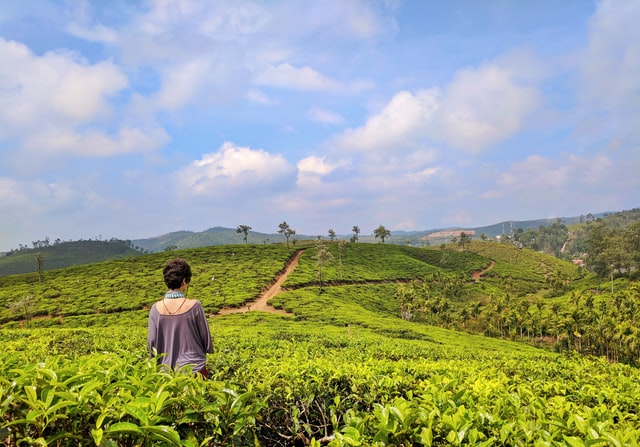munnar-tour-package-green-country-travel-book-hotels-flights-tour-packages-visas-travel-insurance-holidays